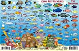 Bahamas Map & Reef Creatures Guide Franko Maps Laminated Fish Card