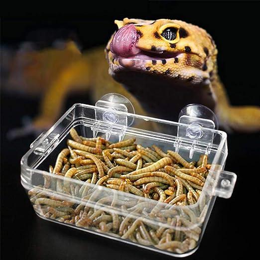 AKDSteel - Alimentador de caja de escape transparente para reptiles serpiente lagartija: Amazon.es: Hogar