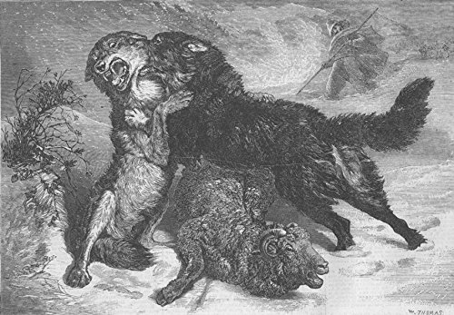 - DOGS. Rescued from the wolf - 1866 - old antique vintage print - engraving art picture prints of Dogs Wolves - Illustrated London News