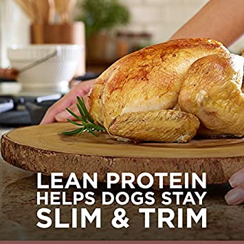 Hill S Ideal Balance Adult Natural Dry Dog Food Chicken Brown Rice Recipe