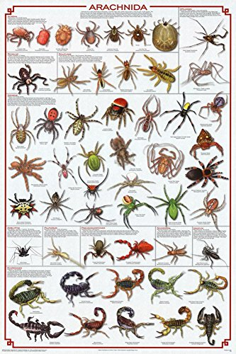Laminated Arachnida Spiders Educational Science Chart Poster