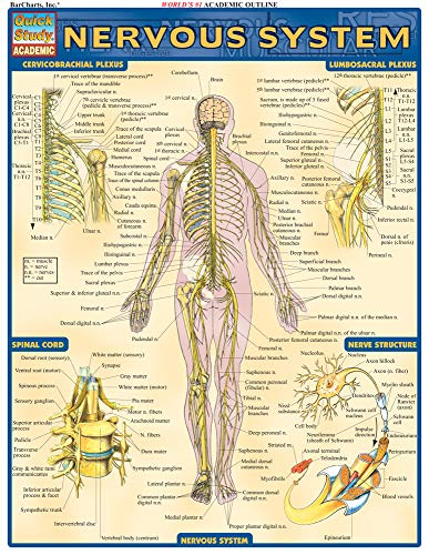 Nervous System (Quick Study Academic)