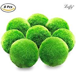Luffy 8 Marimo Moss Balls - Jumbo Pack of Aesthetically Beautiful & Create Healthy Environment - Eco-Friendly, Low Maintenance & Curbs Algae Growth - Shrimps & Snails Love Them