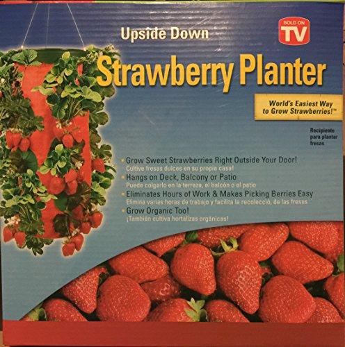 - Amazon.com: Hanging Strawberry Planter!: Kitchen & Dining