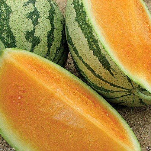 100 Watermelon Seeds -Tendersweet ~Orange Flesh~Organic Seeds