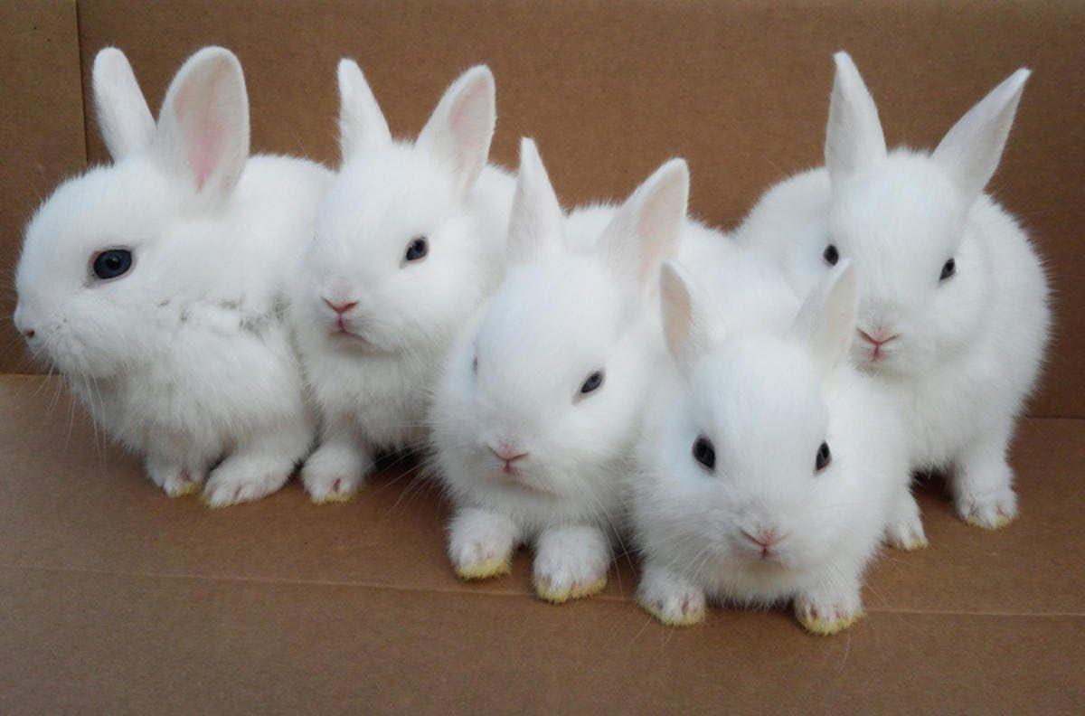 Amazon Com Poster White Bunny S Rabbits Animals Cute Animals Pet Home Decor Wall Art New Kitchen Dining