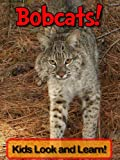 Bobcats! Learn About Bobcats and Enjoy Colorful Pictures - Look and Learn! (50+ Photos of Bobcats)
