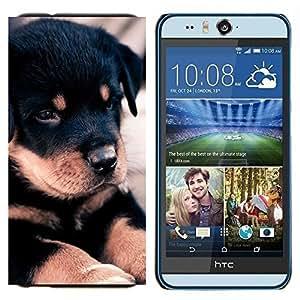YiPhone /// Prima de resorte delgada de la cubierta del caso de Shell Armor - Rottweiler retriever Perro Negro - HTC Desire Eye M910x