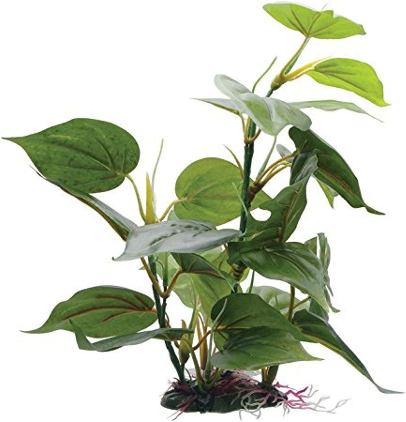 Fluval Anubias Plant for Aquarium, 12-Inch