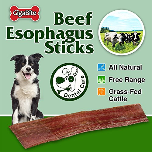 GigaBite 6 Inch Beef Tendon Sticks (15 Pack) – USDA & FDA Certified All Natural, Free Range Beef Tendon Dog Treat – By Best Pet Supplies by Best Pet Supplies, Inc. (Image #2)