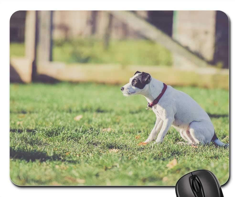 犬用マウスパッド 1122-007 220*180*3 mm B07L4VSXMZ Fl6 300*250*3 mm 300*250*3 mm Fl6