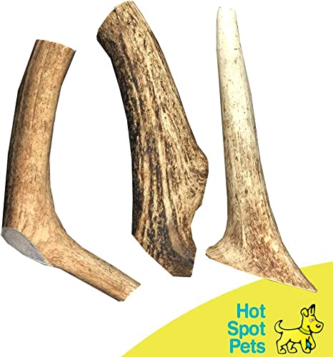 hotspot pets Whole Elk Antler for Dogs Premium Naturally Shed Antlers Long Lasting Dog Chews Rawhide Alternative Treats Made in USA – for Aggressive Chewers – Single Antler