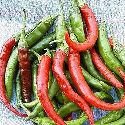 Long Slim Cayenne Hot Pepper Garden Seeds - Non-GMO, Heirloom Vegetable Gardening Seeds