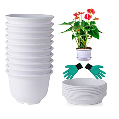 DeElf 10 Sets Plastic Flower Pots 6 inch Planters with Drainage and Saucers for Modern Indoor Plants, Orchid, Herbs, Succulents, Cactus, and Seeding Nursery, White Color, Bulk: Home & Kitchen