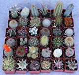 20 Assorted Cactus Collection Cacti Specimens Lot