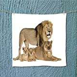 AuraiseHome microfiber towellioness years panthera leo in front white background Excellent Water Absorbent Antistatic W13.8 x W13.8