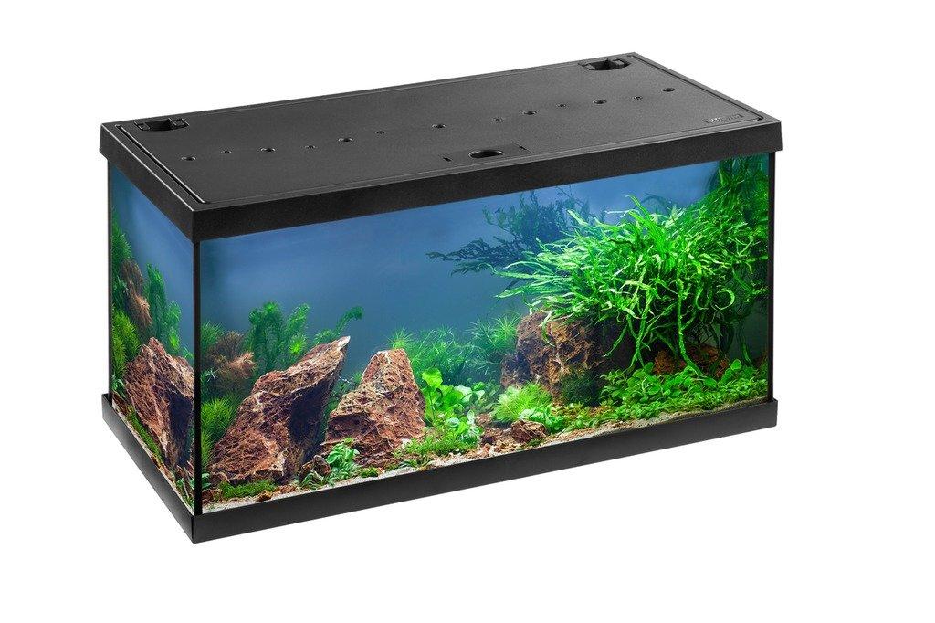 Bombas Acuario Juego completo Aqua Star 54 LED, acuarios de agua dulce Juego 60 x 30 x 30 cm, 54 litros: Amazon.es: Productos para mascotas