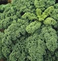 David's Garden Seeds Kale Winterbore D365KALE (Green) 100 Hybrid Seeds
