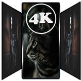 wallpaper pic -  Cute Cat Wallpapers HD | 4K Cute Cat Pics