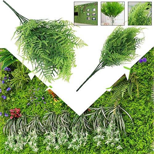 Kicode 2 Pack Easy to Grow Great Houseplant Fern Leaf Asparagus Fern-13