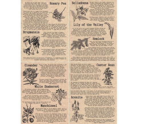 set-of-4-book-of-shadows-pages-on-poisonous-plants-wicca-witchcraft-like-charmed-copper