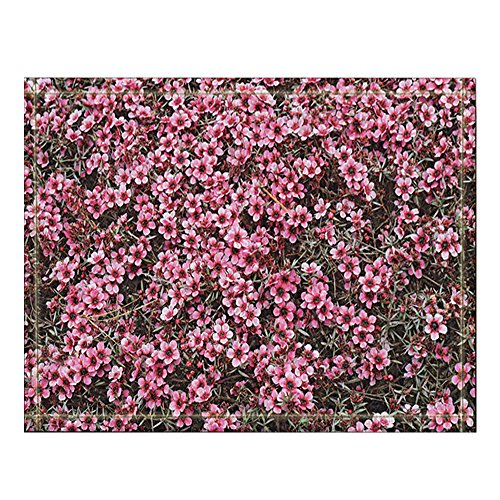 - NYMB Numerous Small Pink Flowers of the Hybrid Australian Tea Tree Leptospermum fill the Frame Bath Rugs, Non-Slip Floor Entryways Outdoor Indoor Front Door Mat,60x40cm Bath Mat