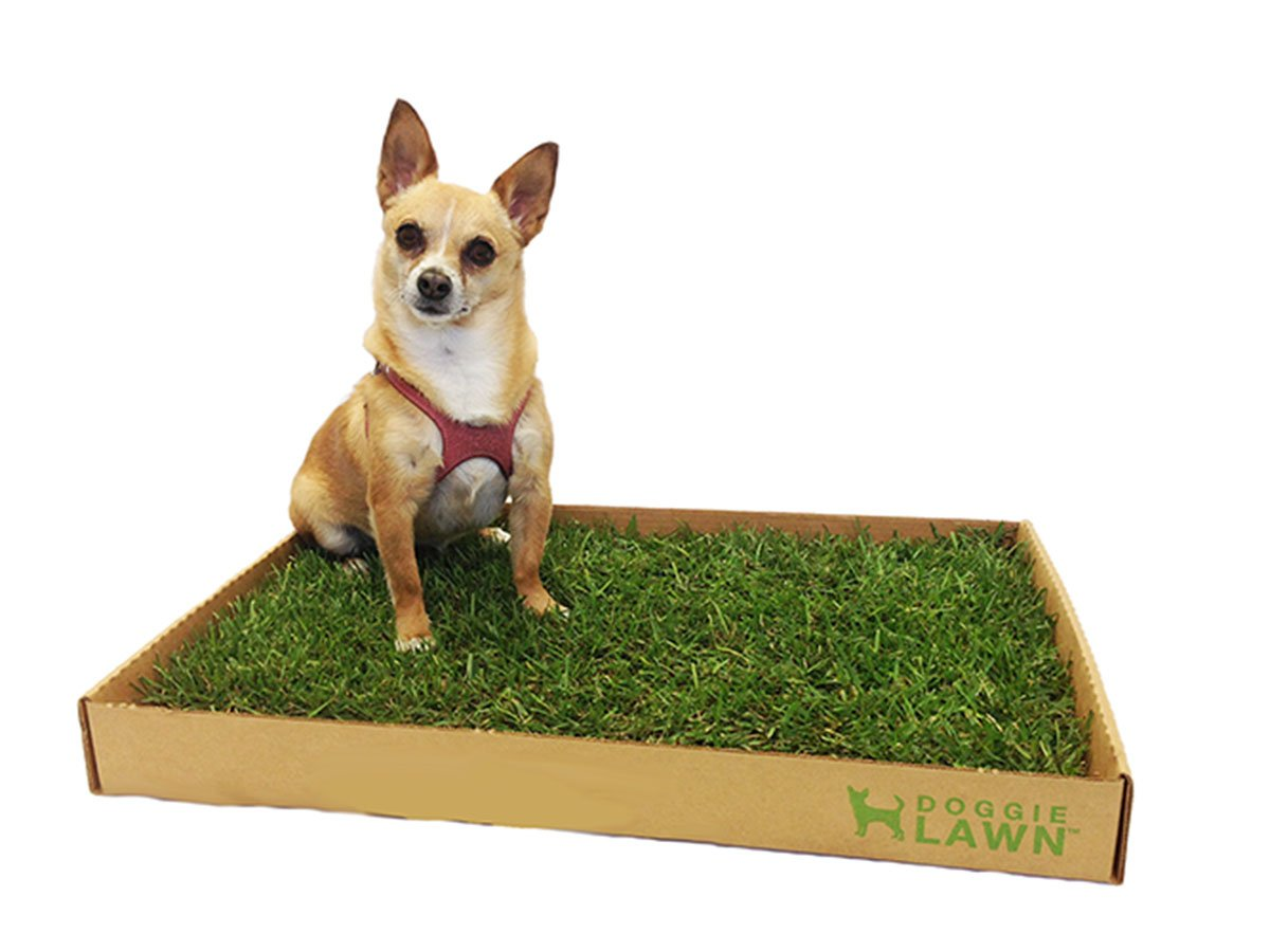 DoggieLawn Disposable Dog Potty with Real Grass