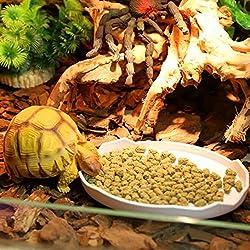 ThinkPet Plastic Reptile Food and Water Bowl Terrarium Dish Aquarium Ornament Egg S
