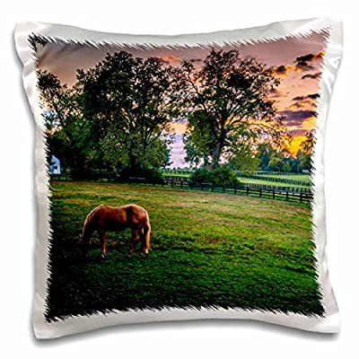 Danita Delimont - Rural - USA, Lexington, Kentucky. Lone horse at sunset, Darby Dan Farm. - 16x16 inch Pillow Case (pc_230837_1)