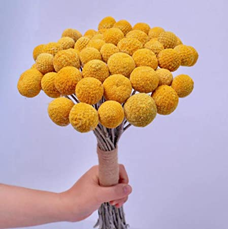 Tooget Natural Craspedia Dried Flowers Yellow Billy Buttons Balls Bouquet Bundles Real Freshly Harvested Dry Plant Bunch Arrangements Decorate For Home Crafts Party Wedding Store Amazon Co Uk Kitchen Home