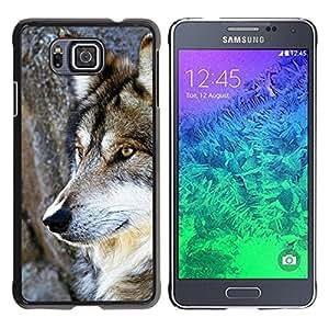 Paccase / SLIM PC / Aliminium Casa Carcasa Funda Case Cover para - Wol Wild Tree Nature Dog Animal Brown - Samsung GALAXY ALPHA G850
