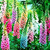 Beautiful Mixed Foxglove 100 Seeds! Comb.