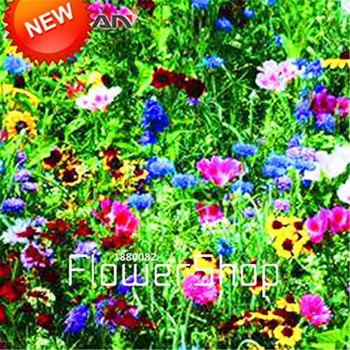 New Arrival!200 Seed/bag Combination Seeds Perennial Flower Planting Mixed Wildflower Seeds Aromatic Fragrant,#5BEZ1C