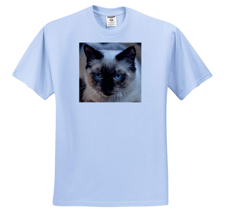 3dRose Sven Herkenrath Cat Adult T-Shirt XL Portrait of Siam Cat Pet Kitten ts/_311448