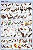 Birds Educational Science Chart Poster 24 x 36in