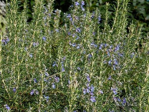 7 16 organic floral plugs - 2