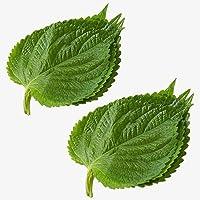 200 piezas de semillas de Perilla Delicado melocotón en forma de corazón Hojas verdes Shiso Fácil de plantar Decoración…