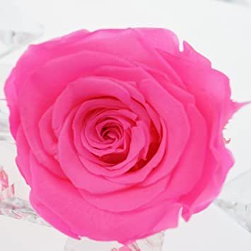 e2f441c61cf3 Amazon.com  INVISIKAYAK preserved fresh Roses Flower Head,1.6-2 ...