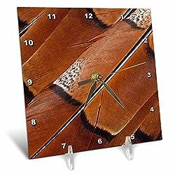 3dRose Danita Delimont - Feathers - Tail feathers of Copper pheasant - 6x6 Desk Clock (dc_250154_1)