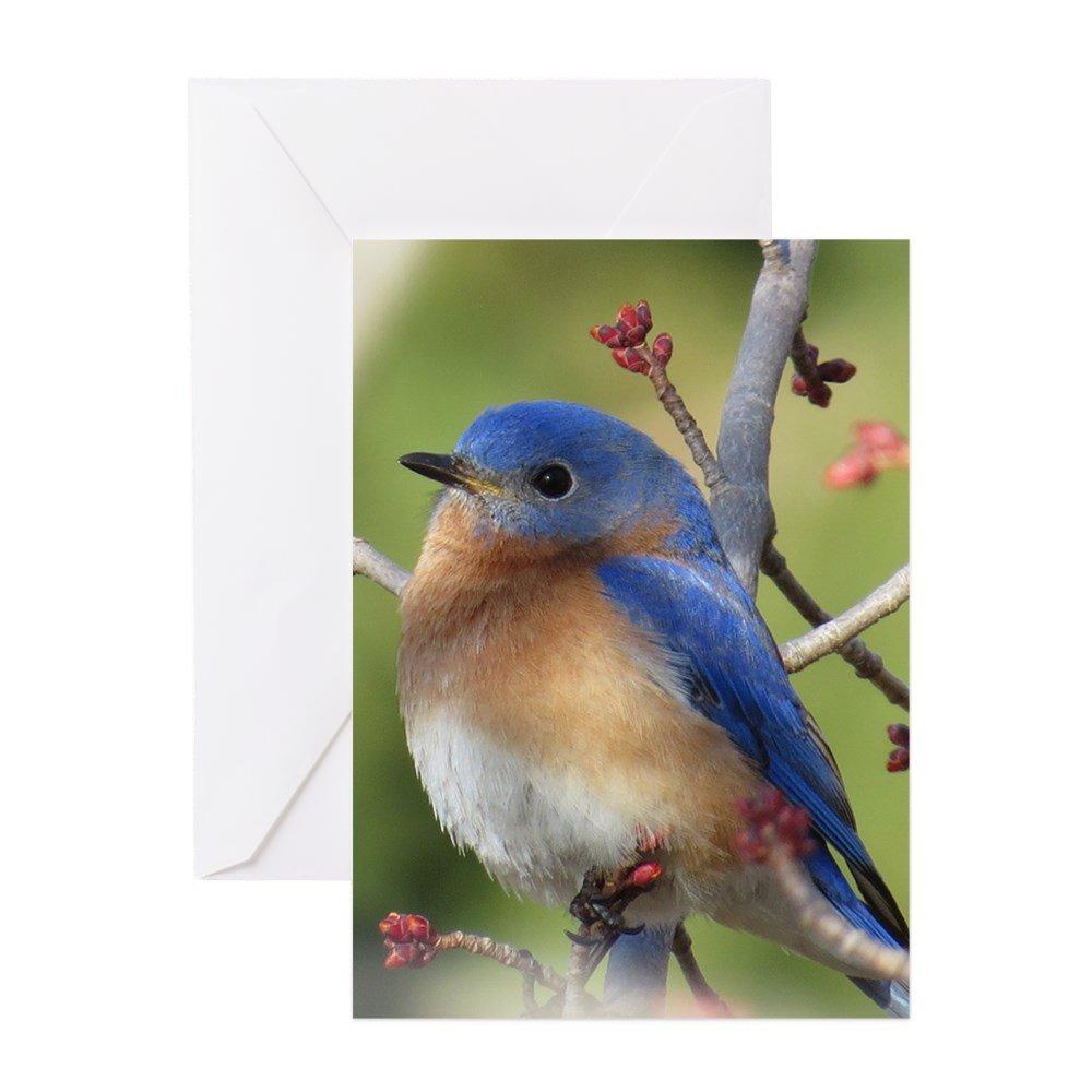 Amazon Cafepress Red Bud Bluebird Greeting Cards Greeting