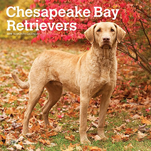 Chesapeake Bay Retrievers 2019 Calendar (Multilingual Edition)