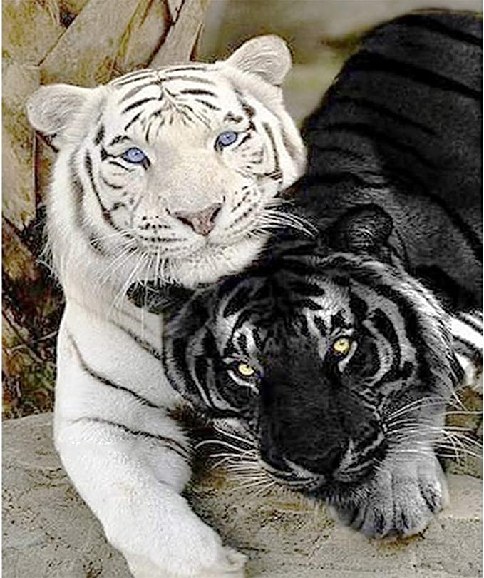 5D White Tiger Embroidery Diamond Painting Craft Cross Stitch Kits Home Decor