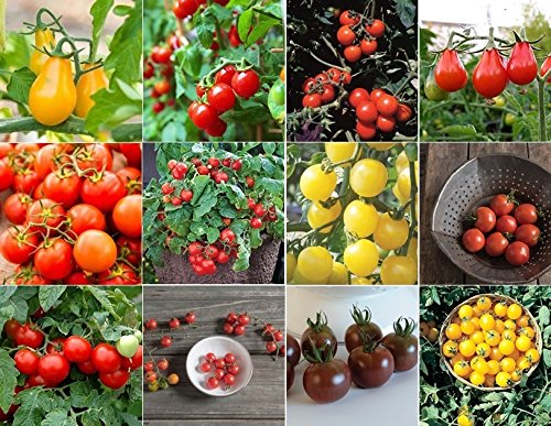 David's Garden Seeds Tomato Seed Collection Cherry NEP933V (Multi) 600 Seeds (Open Pollinated, Heirloom, (Heirloom Cherry Tomato Seeds)