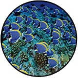 Printing Round Rug,Ocean,School of Powder Blue Tang Fishes in the Coral Reef Maldives Deep Seas Mat Non-Slip Soft Entrance Mat Door Floor Rug Area Rug For Chair Living Room,Aqua Blue and Yellow