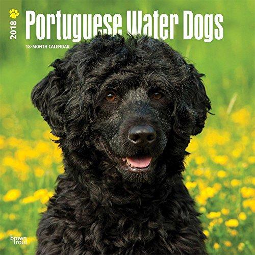 portuguese water dog calendar - 7