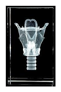 Larynx 3D Laser Crystal 10lb, Anatomy, Voice Box, Singing, Adam's Apple