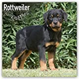 Rottweiler Puppies Calendar - Dog Breed Calendars - 2017 - 2018 wall Calendars - 16 Month by Avonside