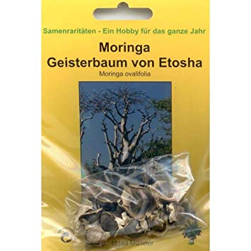 Moringa Geisterbaum Bonsai Moringa ovalifolia 90076 10 Samen v