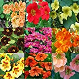 Nasturtium seeds Set (9 pac) variable color Flower Seeds