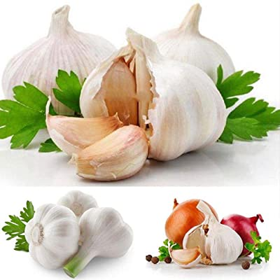 Oguine 100pcs/ Bag Giant Garlic Seeds Garden Organic Vegetable Plant Vegetables : Garden & Outdoor